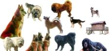 狗素材图片