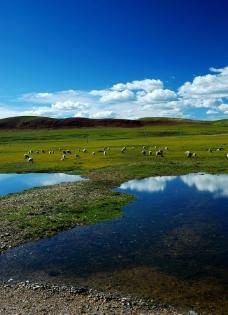 高原羊群图片