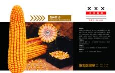 玉米种子宣传报纸图片