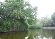 湖边绿树图片