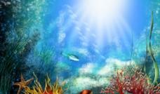 海底景观图片