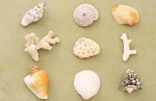 贝壳和珊瑚图片