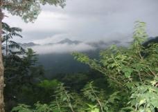 山峰森林图片