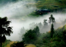 雾中的梯田图片