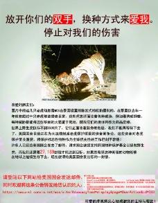 东北虎 公益海报图片