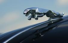 豪华捷豹轿车标志图片