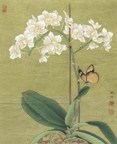 白蝴蝶兰图片