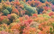 秋季树木图片