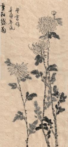 国画菊花图片