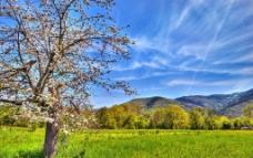 春天户外风景图片