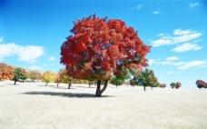 草原之秋图片