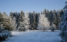 冬天下雪森林景色图片