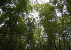 日照竹洞天图片