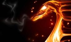 火焰龙图片