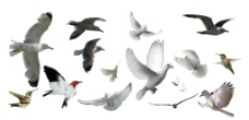飞鸟合集图片