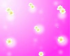 花飞舞图片