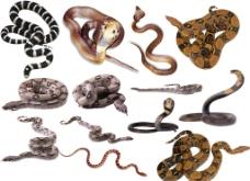 13款蛇素材图片