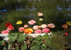 日本名古屋街边的荷池小景图片