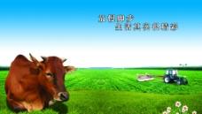 黄牛耕地图片