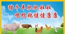 动物保健图片