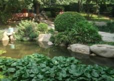 水中植物图片