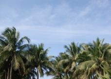 海南假日海滩椰子树图片