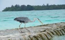 沙滩上的海鸟图片