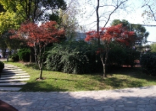 双子树图片