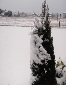 雪中树图片