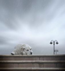 淋雨的狗狗图片