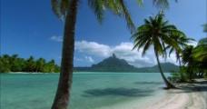 海边 椰树图片
