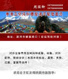 藏獒名片图片