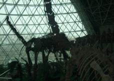 恐龙化石图片