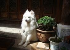 丽江宠物狗图片